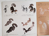 Painting Squirrels Step-by-step with Henry Li(Zoom recording)