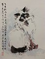Portrait of a Himalayan Cat