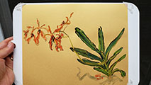 Renanthera #4 Original Watercolor