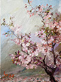 Blooming Cherry Plein Air Painting Oil on Canvas 9x12
