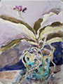Gift Painting 134 phalaenopsis orchid in Blue Pot 12x9